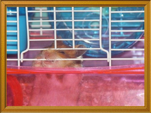 Fotolog de maryss03: Hamster